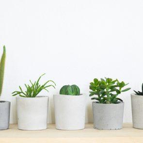 succulent plant in handmade concrete pot in room decoration