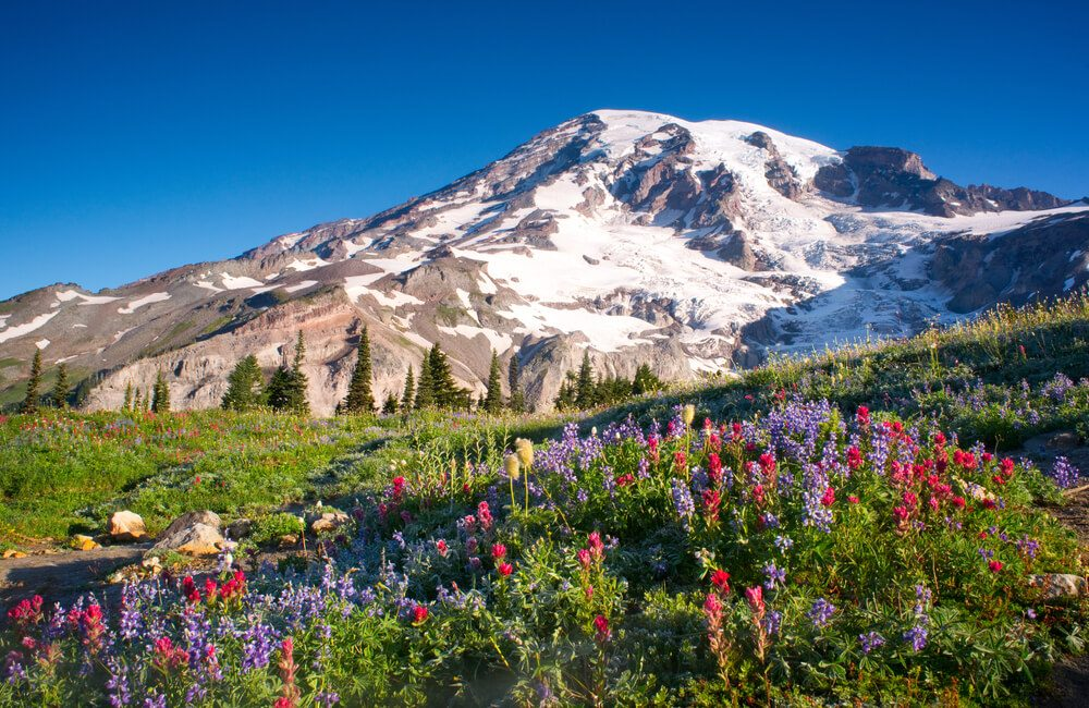 Mt Rainier National Park Wildflowers Summer Time Cascade Mountain Wilderness