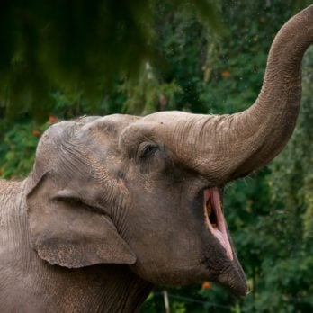 14 Wild Animal Species You Never Knew Were Endangered