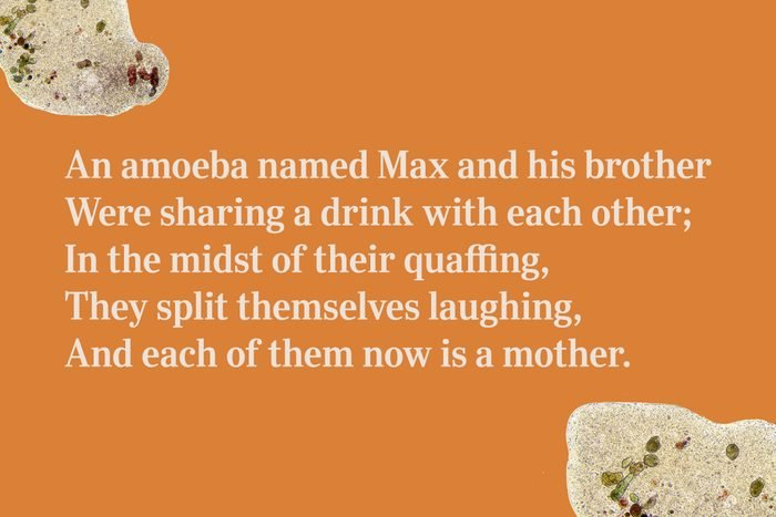 An amoeba named Max and his brother / Were sharing a drink with each other; / In the midst of their quaffing, / They split themselves laughing, / And each of them now is a mother.