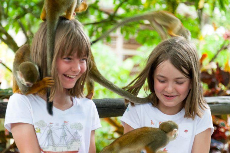 monkeyland