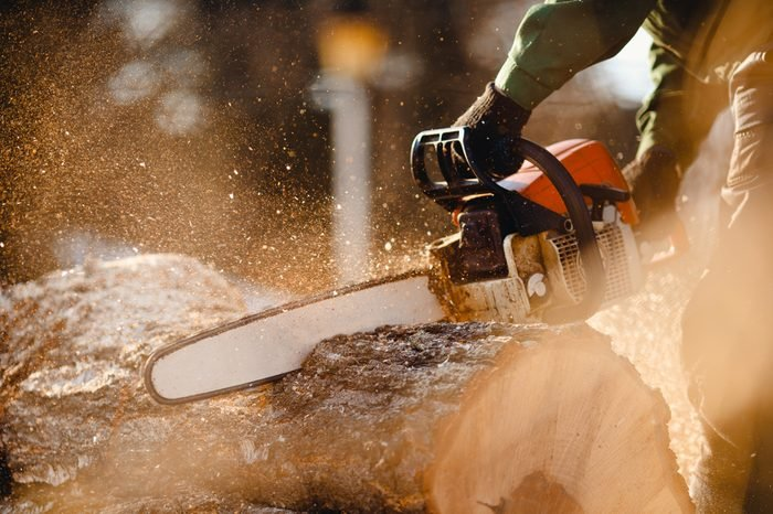 Chainsaw. Close-up of woodcutter sawing chain saw in motion, sawdust fly to sides. Concept is to bring down trees.