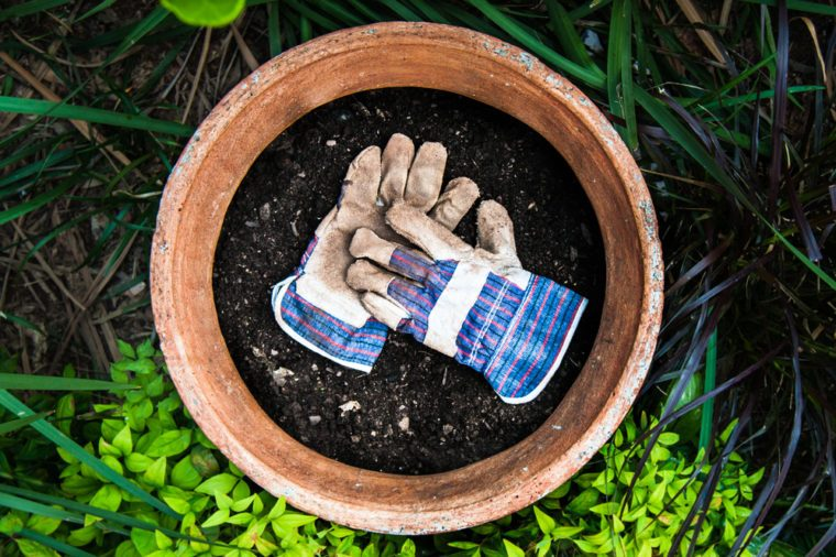 Garden gloves in plant pot