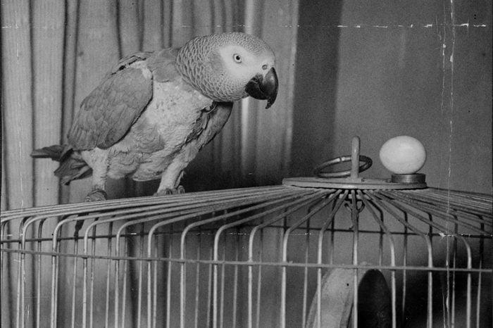 Josephine The Parrot