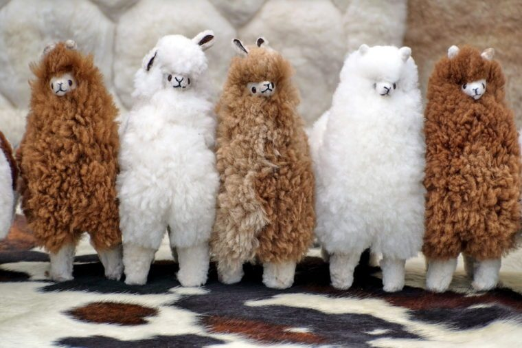 Stuffed fur llamas in the Otavalo Market