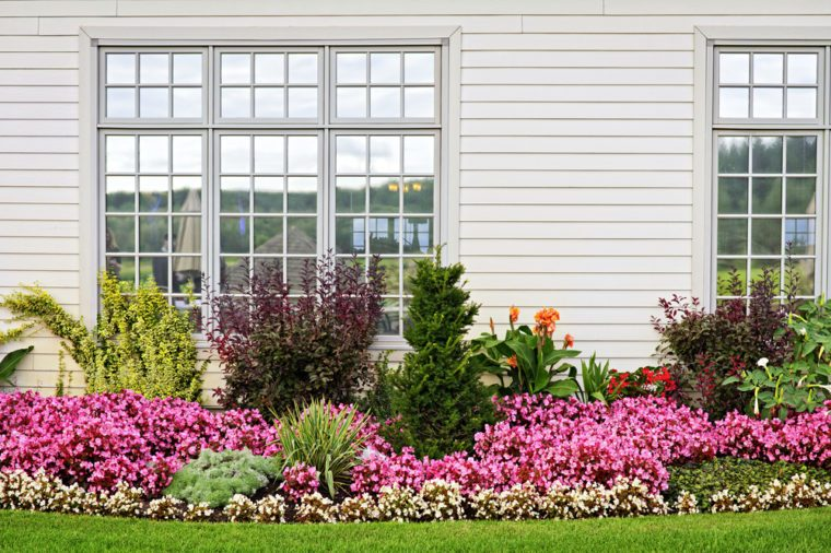 Flowerbed of colorful flowers against wall with windows