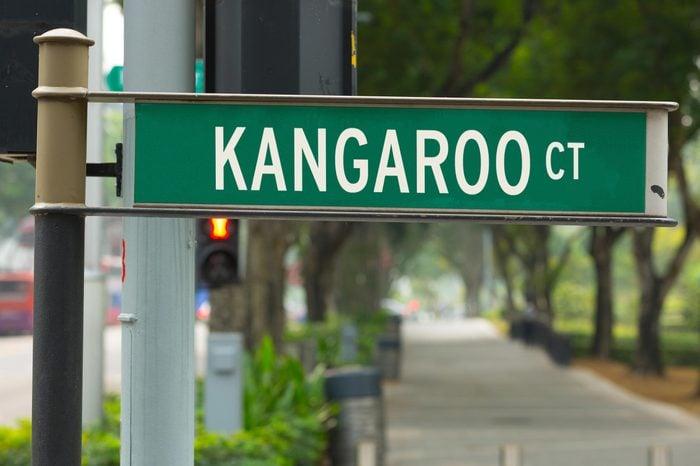 Kangaroo CT