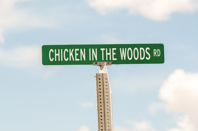 Chicken in the Woods Rd.