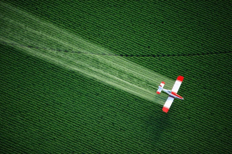 An aerial view of a crop duster or aerial applicator, flying low, and spraying agricultural chemicals, over lush green potato fields in Idaho.
