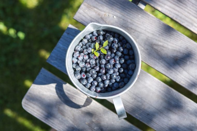 Blueberry Picking in Sweden