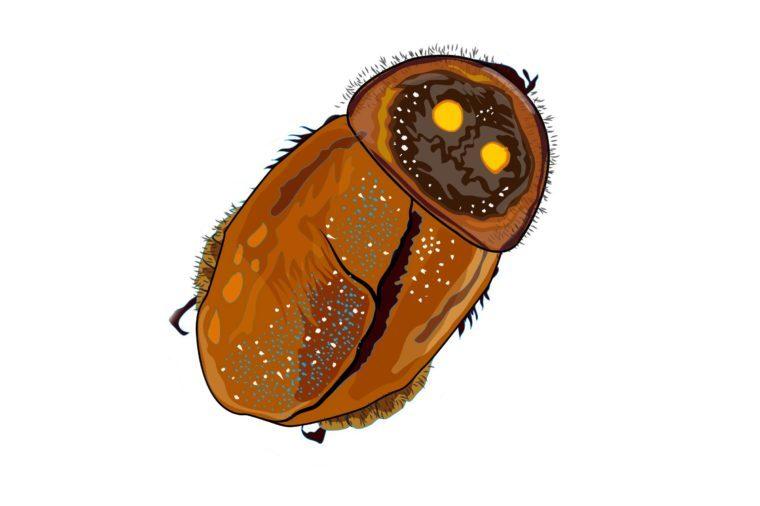 Glowing-roach