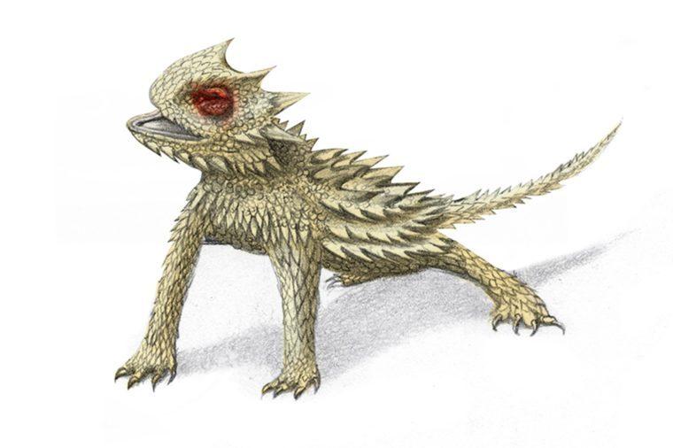 Horned-lizard