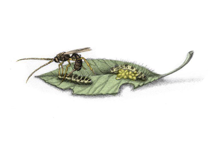 Xenomorph-wasp