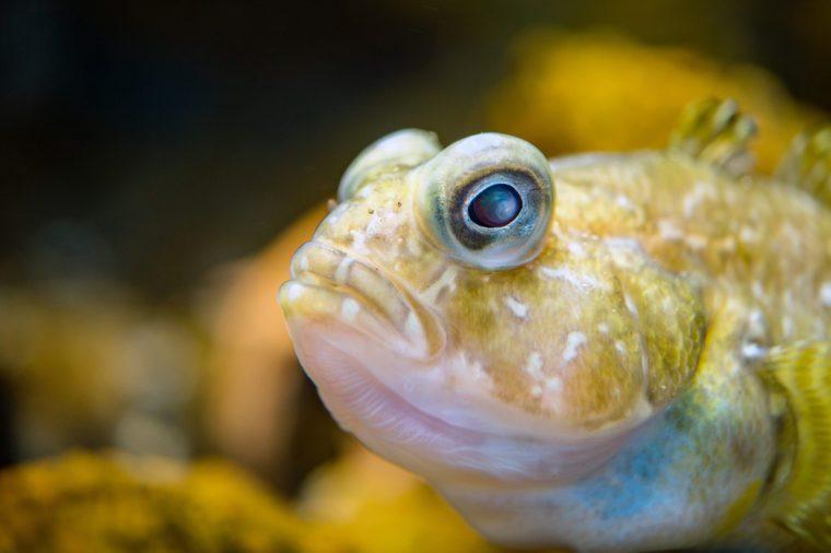 antarctic fish_ocean facts