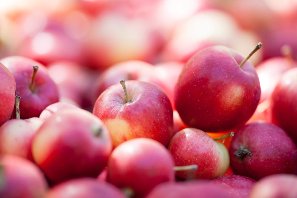 Fresh organic red apples in orchard