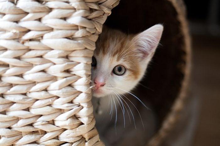 cute ginger kitten peeking out of a wicker pod