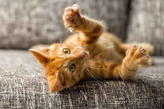 Little cat playing on the bed