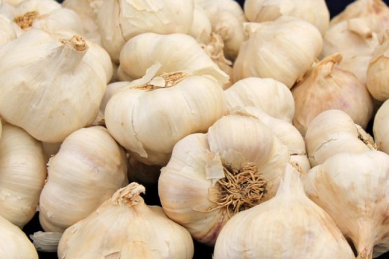 A Collection of Freshly Picked Garlic Bulbs.