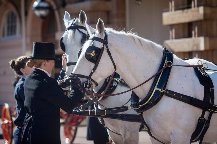 Two Windsor Greys, which will pull the carriage at the wedding of Prince Harry and Meghan Markle, are groomed at the Royal Mews at Buckingham Palace, London