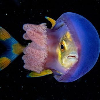20 of the Most Incredible Underwater Photos Ever Taken