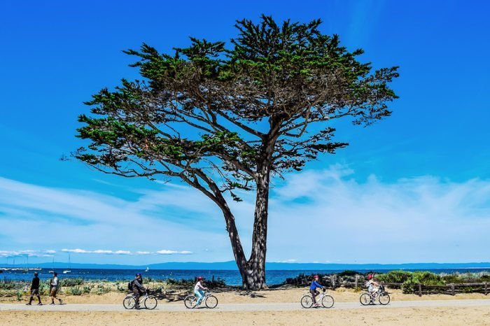 Monterey, California, USA - April 9, 2015: Bike riders and walkers enjoy an active lifestyle and Cypress Tree (Cupressus macrocarpa) on Monterey Bay Coastal Trail on clear day on the central coast.