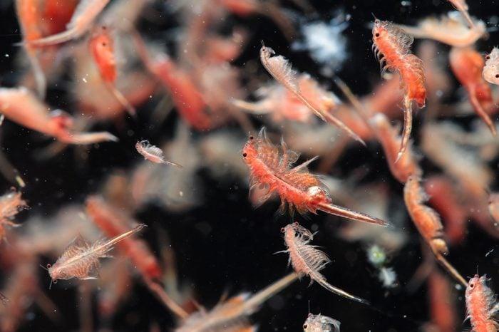 plankton_ocean facts