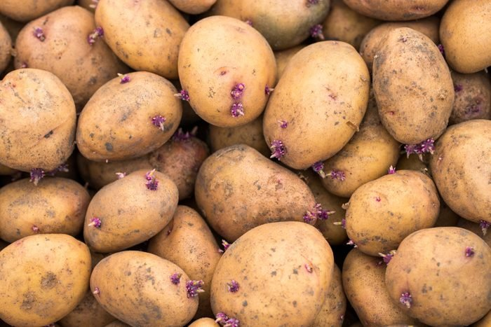 Fresh organic potato stand out among many large background potatoes in the market. Close-up potatoes texture.