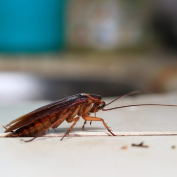 The 10 Most Disgusting House Bugs and How to Get Rid of Them