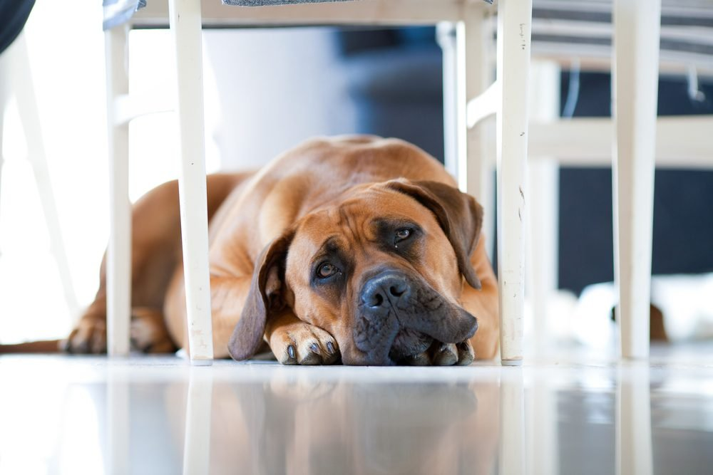 Dog Depression: Signs Your Pet Is Actually Depressed