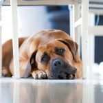 10 Silent Signs Your Dog Is Depressed