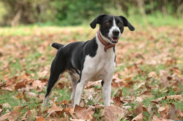 Crossbreed dog poses outdoors in an autumn scenery
