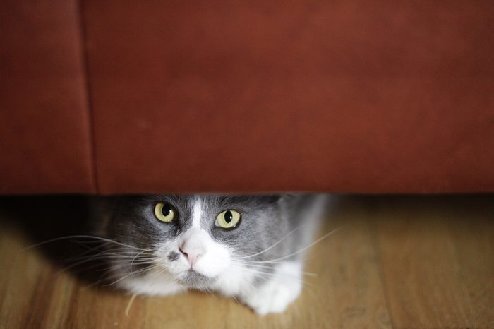 cat hiding under couch