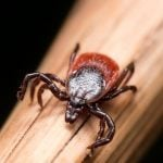 This State Has the Most Tick-Borne Diseases in America