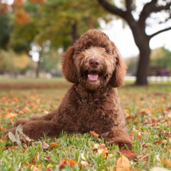 18 Best Dog Breeds for Kids