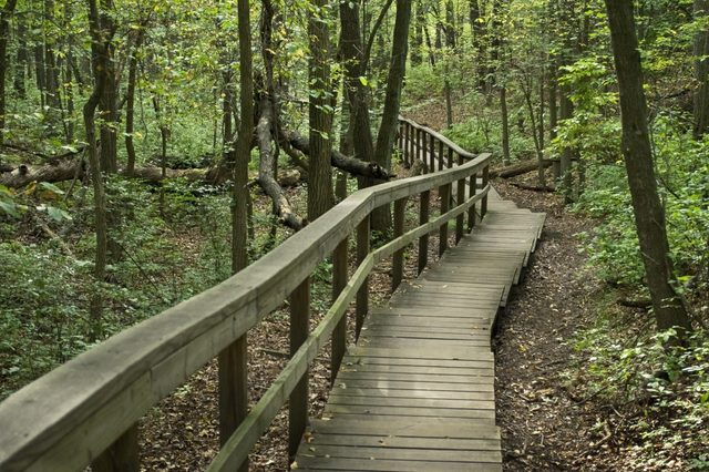 Wooden steps and a railing help the start of this hike along marked trails in Cheesequake Park in Monmouth County, New Jersey.