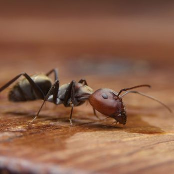 9 Myths About Ants You Need to Stop Believing