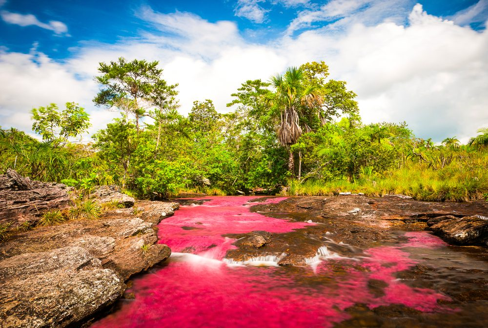 Multicolored river in Colombia, Cano Cristales