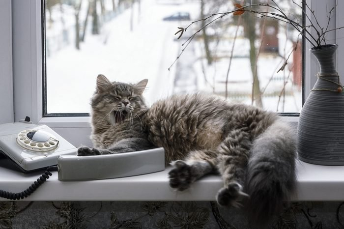 Cat and phone