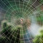 14 of the Most Elaborate Spider Webs Ever Found in Nature