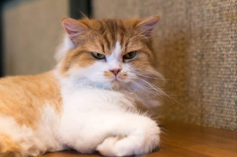 Image result for angry cats