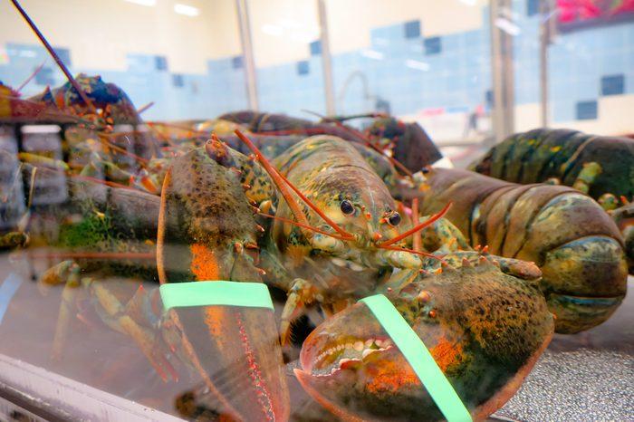 Lobster in a tank