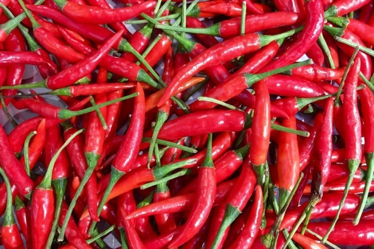 Red hot chili peppers background from nature, chili is the most favorite kind of ingredients in spices of Thai foods