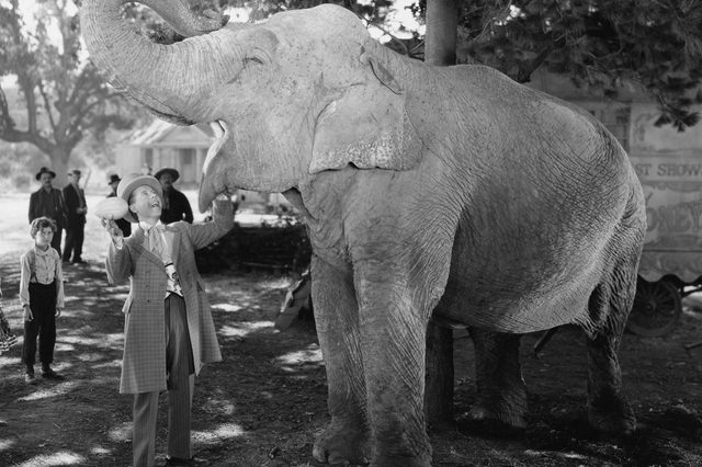 Man feeding elephant with wide open mouth