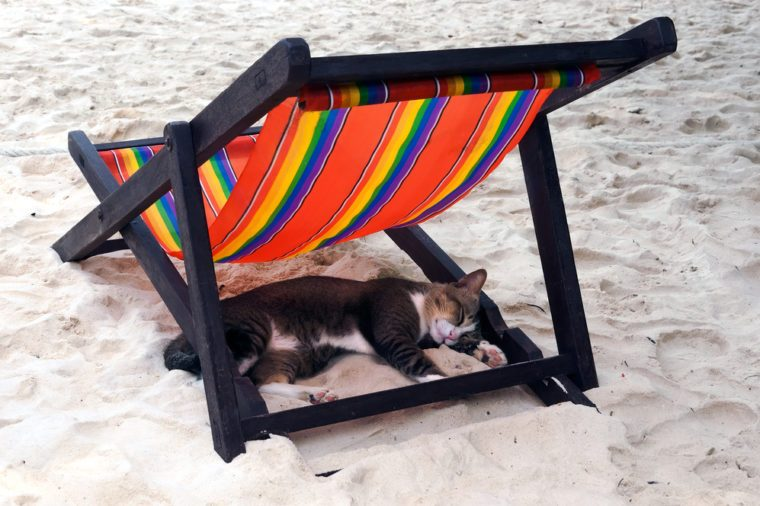 cat sleeping on the sand beach in the shade of deck chair