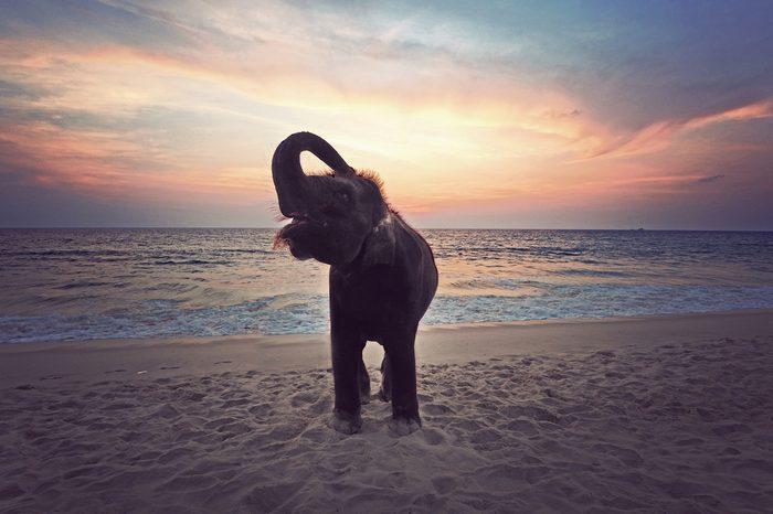 Happy Elephant on the beach