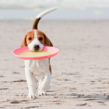 12 Animals Who Love the Beach More Than You