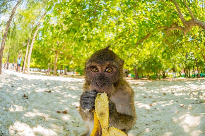 Monkey on Poda beach in Krabi Thailand
