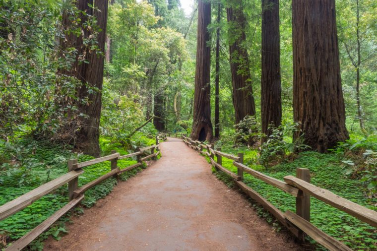 Muir Woods National Monument is an old-growth coastal redwood forest.