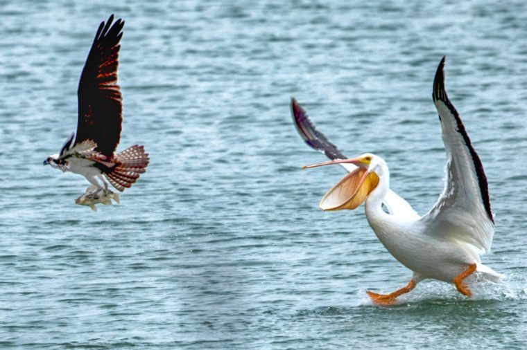 Why Bird Brain Shouldnt Be Considered >> Hilarious Bird Photos You Shouldn T Miss Reader S Digest