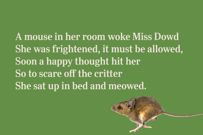 cat and mouse limerick for kids